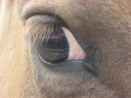 Bucks_eye_2